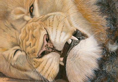 Mammals gallery