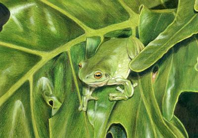 Reptiles gallery