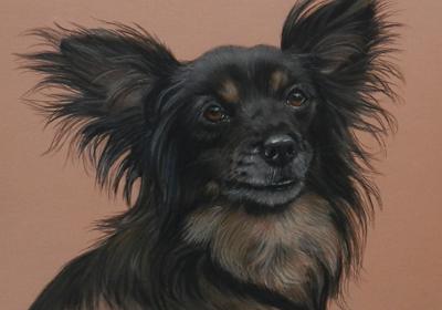 Pet Portraits gallery