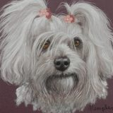 Pet Portraits in Pastel pencils workshop