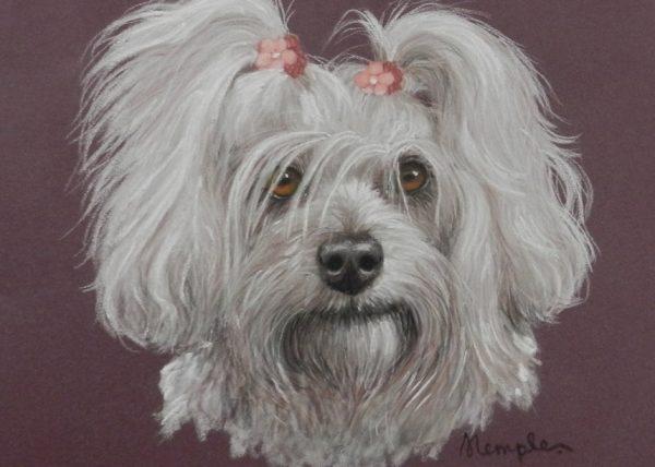 Pet Portraits in Pastel pencils workshop